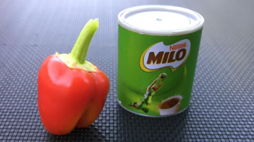 Capsicum as big as a tin of milo